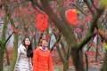 郴州桂阳:三千亩樱花次第绽放