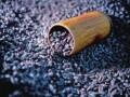 豆豉江湖:黑豆豉黄豆豉都到碗里来