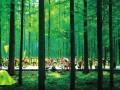 [清凉消夏]森林:清凉童话王国