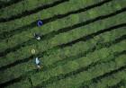2021中华茶祖节4月20日在炎陵举办
