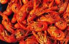 驚爆唇齒味蕾 讓你吃得滿嘴流香的鹵蝦