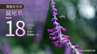 湖湘自然历丨紫色而芬芳的,不只有薰衣草