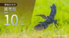 湖湘自然历丨像一棵水草,随风飘摇
