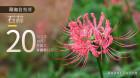湖湘自然历丨地上开出了一朵烟花