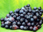 乌云界蓝莓