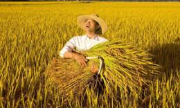中国农民丰收节,是对农民的崇高礼赞