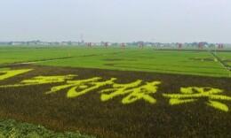 中国农民丰收节·专访 农业兴旺,必须把品牌做出来