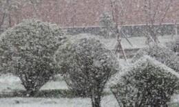 大雪时节飞雪到 长沙城区难见纯雪