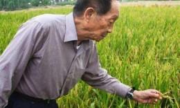 央视新闻丨袁隆平:保障粮食安全 我们要担当