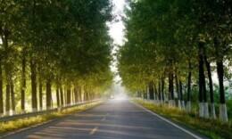 逾7000公里国省道有了新界碑