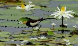 南山國家公園啟動愛鳥護鳥活動