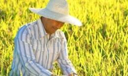 2019湖南省十佳农民启动申报 入围者可获5万元项目经费