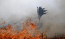实拍巴西亚马孙雨林火灾 大火浓烟超百米
