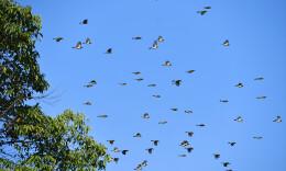 秋高氣爽 群鳥歡飛