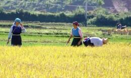湖南明確31位種植業專家對口指導 助力20個貧困縣脫貧