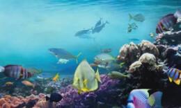 日本将核废水排入大海会有什么后果?海鲜还能吃吗?
