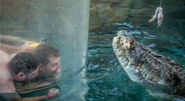"""现实版的""""鳄鱼邓迪"""":澳鳄鱼猎手带小鳄鱼一起洗澡"""