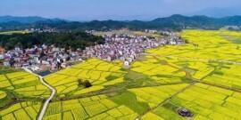 湘赣边区将建乡村振兴示范区