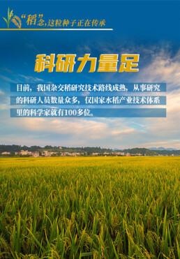 """【海�N】""""稻""""念,這粒掔子正在傳承"""