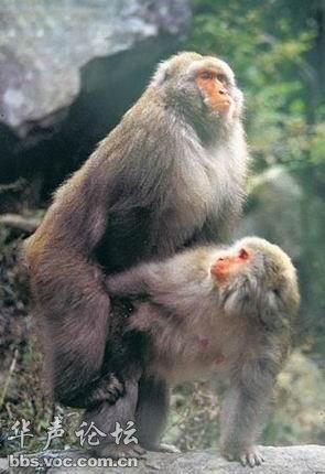 正面猴子的画法步骤