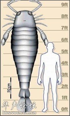 节肢动物辉煌——海洋蝎
