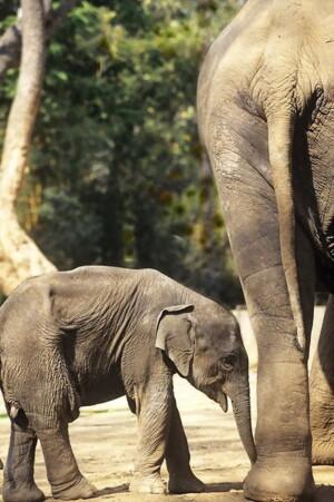 世界野生动物基金会公布世界最濒危物种