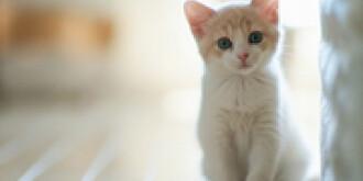 新锐丨管弦:《爱猫如子》