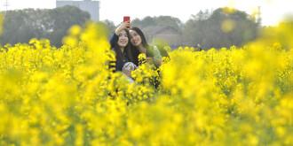 速看,长沙春季公园赏花攻略