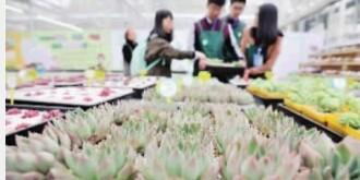 省植物园多肉植物馆开馆  近千种多肉植物等您来观赏