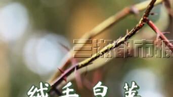 """湖湘巨灵丨南岳""""活文物"""",植物界""""金丝猴"""""""