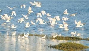 美麗濕地 鷺鳥樂園