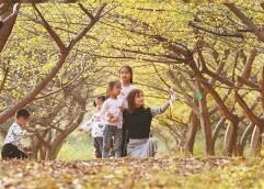 森林公园秋意浓