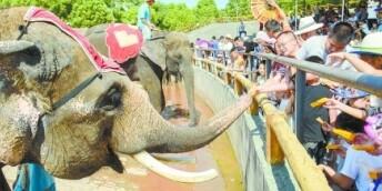长沙动物园迎来旅游高峰