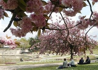 巴黎:花前树下