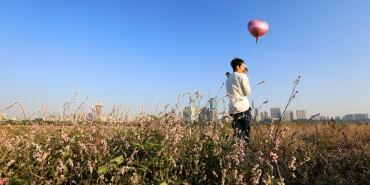 摄在长沙:漫步江边 芦苇摇晃