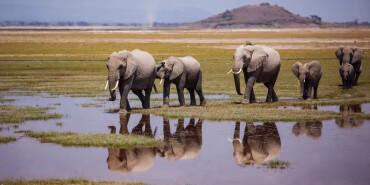 实拍肯尼亚动物大迁徙 非洲真的值得去吗?