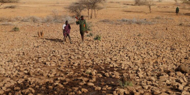 残忍杀大象 肯尼亚牧民与动物争夺水源