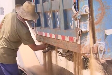 湖南已收购新早稻125.1万吨
