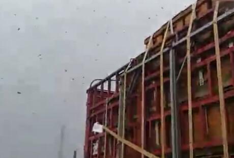 拉蜂车抛锚 万只蜜蜂市区飞舞
