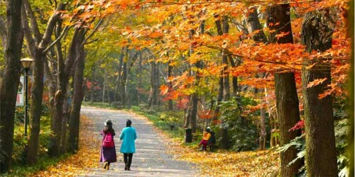 """数""""枫""""流美景 还看湖南省植物园"""
