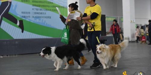 600只狗狗长沙定向寻宝  刷爆长沙宠物圈
