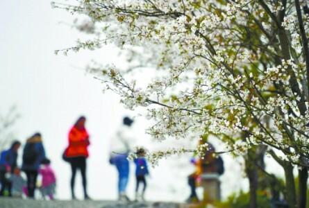 春分时节好踏春