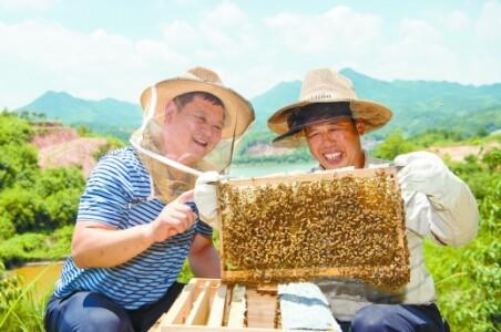 养蜂合作社助力精准扶贫