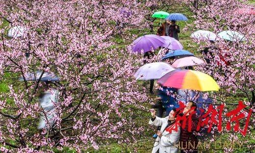 共享爱的春天