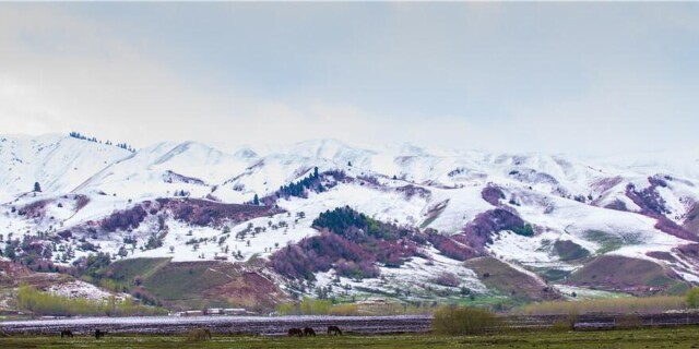 四月新疆那拉提草原披银装 无边美景让游客如痴如醉