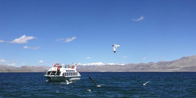 夏日班公湖:棕头鸥的天堂