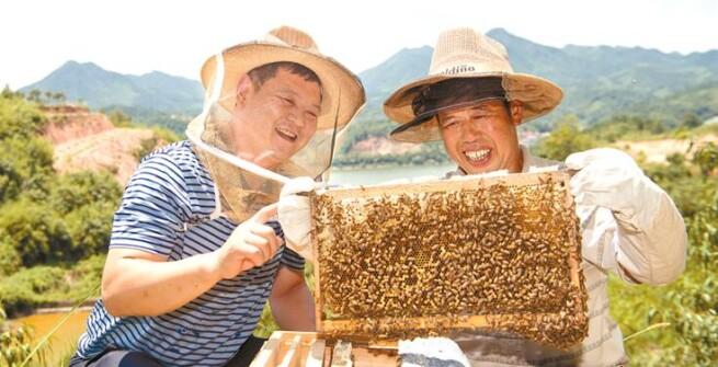 浏阳养蜂合作社助力精准扶贫