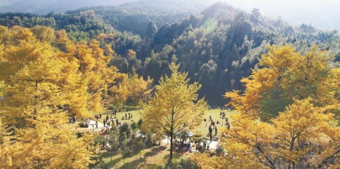 [镜观其变]林业:从资源到生态