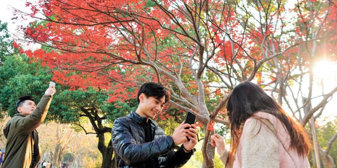 冬日暖阳映叶红