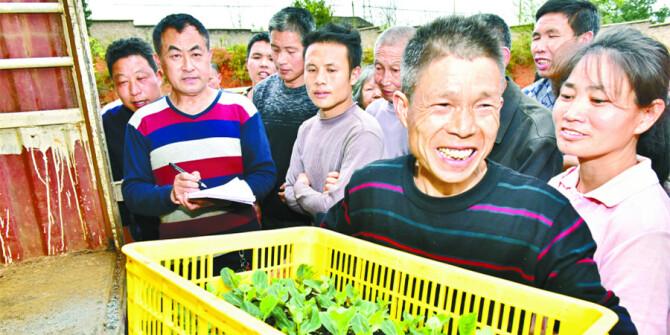 异地育苗促增收